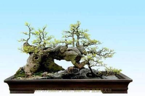 岭南水崖盆景追求 不似之似的艺术效果
