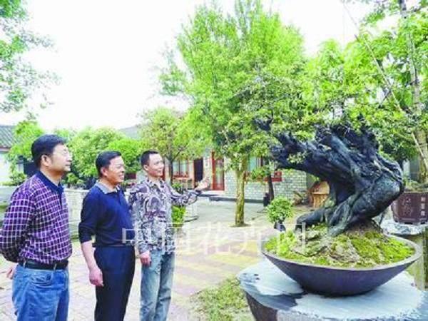 四川:国庆与经典盆景相遇