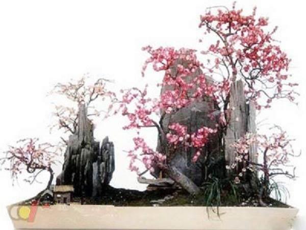 梅花盆景桩景的制作及6个式样