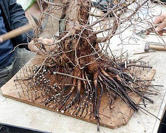 注射农药防治治夏秋树木害