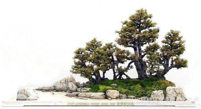水旱型岛屿式的盆景布局