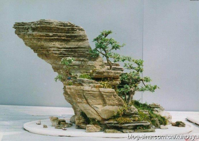 靖江山水盆景制作方法吸引大学生学习者