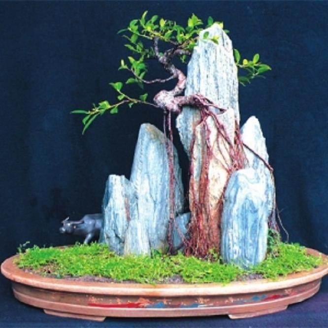 怎样制作附石榕树盆景的方法