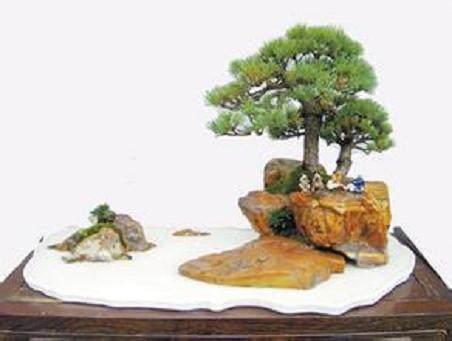 栽植附石盆景怎么发芽生根的方法 图片