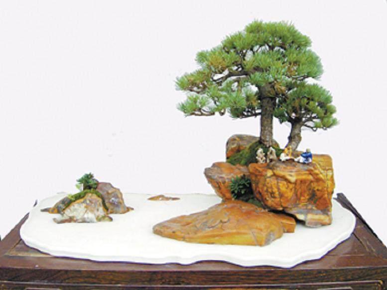 附石树型盆景怎么塑造的3个要诀