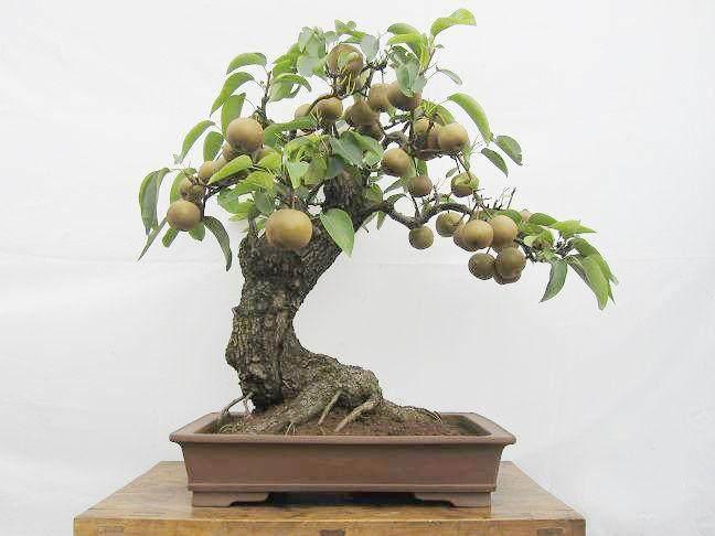 怎样使果树盆景结好的4个方法
