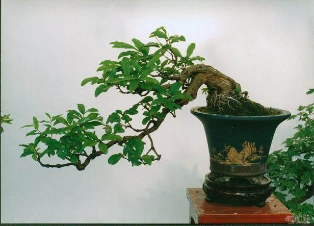 室内培养水生花卉盆景的四个注意事项
