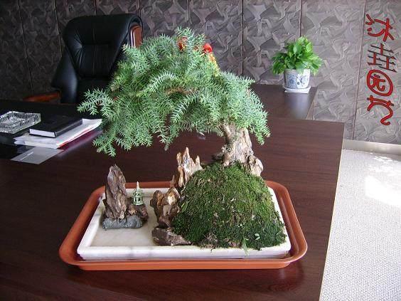盆景修剪的3个植物特性是哪些