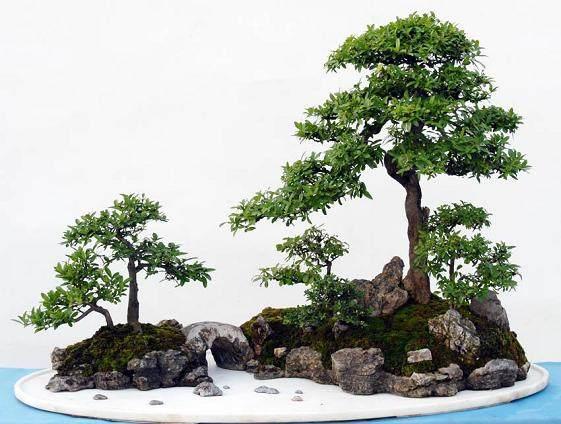树石盆景的土石造型法_冯连生