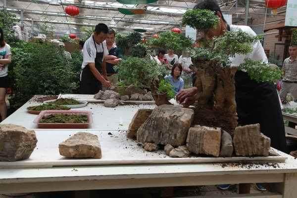 树石式盆景怎么制作的设计图
