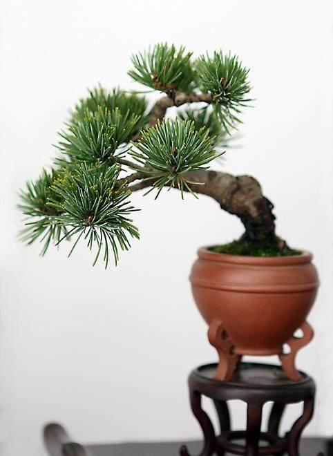 奇妙的微型盆景与其植物材料