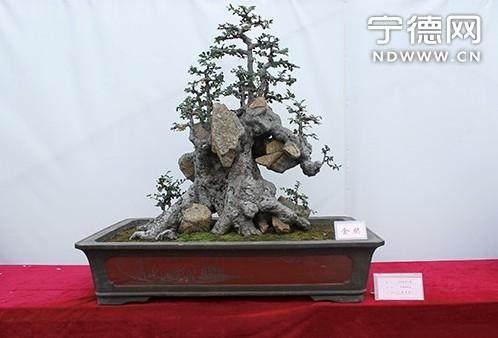 霞浦盆景的栽植与养护