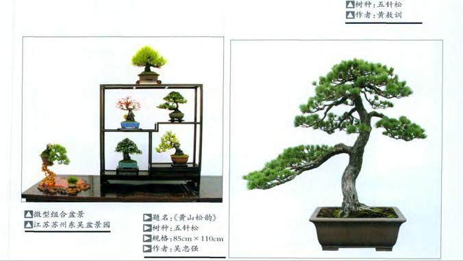 三角枫盆景作品赏析