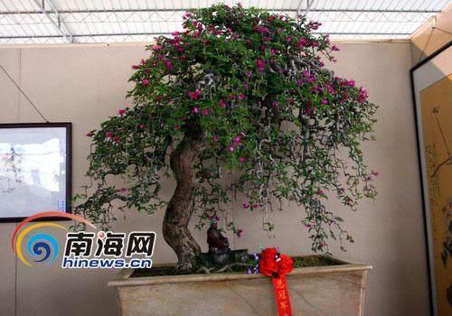 海南盆景树种怎样生根发芽成活率最好