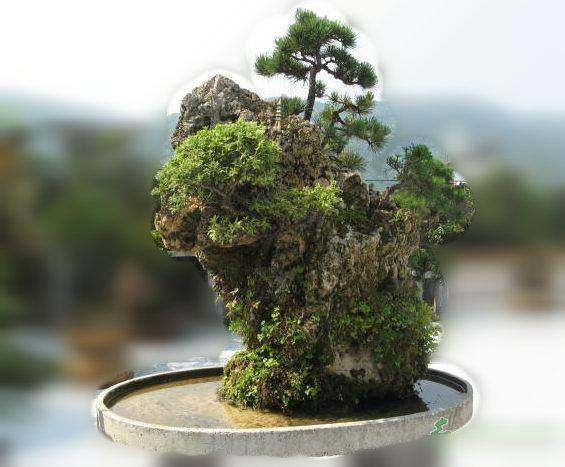 吸水石假山盆景制作
