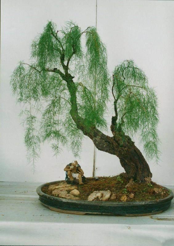 杂木成型后失枝的问题