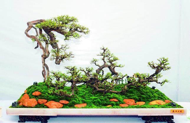 异型树桩盆景怎么造型设计 图片