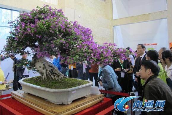 中国杯盆景大赛总冠军是一盆来自广东的树木盆景