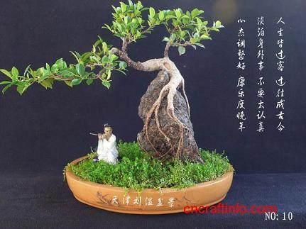 福建茶盆景的特性有哪些