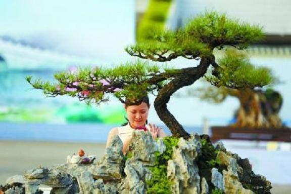 第十届粤港澳台盆景艺术博览会在东莞开幕