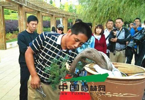 云南:盆景大师张志刚赴宣威传授盆景制作技巧