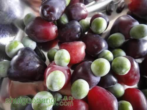 罗汉松的果实能吃吗