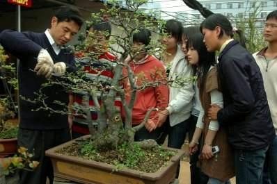 观赏花木通过整形修剪可以调整花木的长势