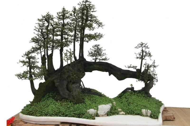 冬季怎样选盆景树桩
