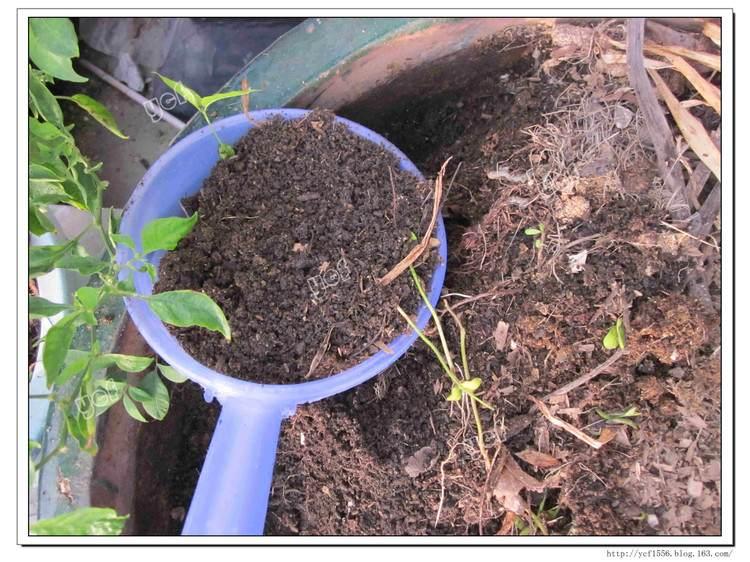 树桩盆景如何翻盆换土的4个方法