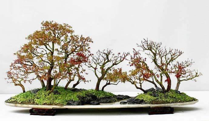 树桩盆景切壤控长法