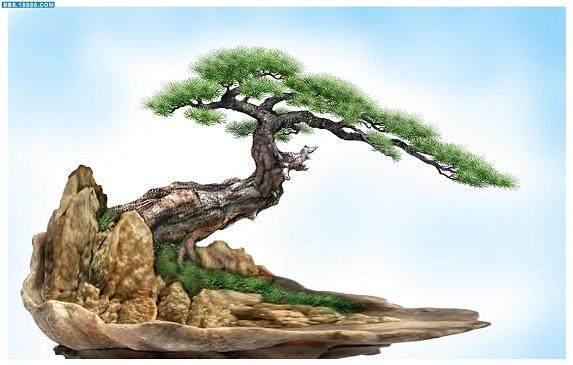 树桩盆景制作工艺(2)