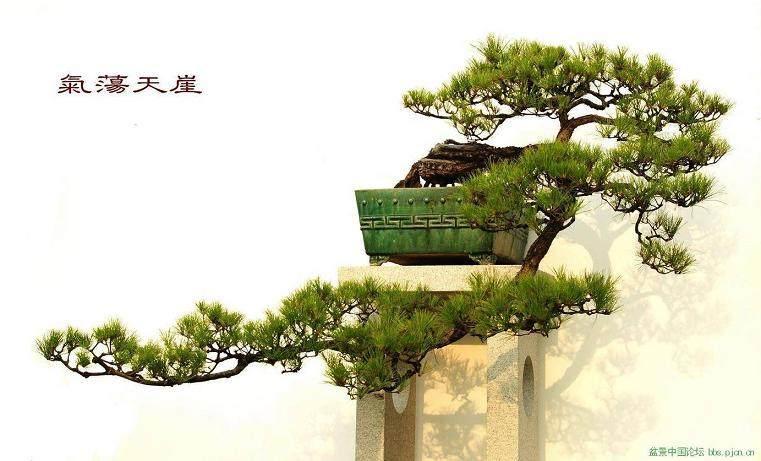 树桩盆景怎样生根制作的方法
