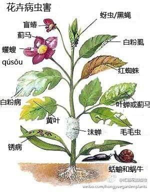 花卉病虫害冬季防治措施