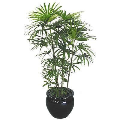 棕竹盆景怎么制作的4个方法