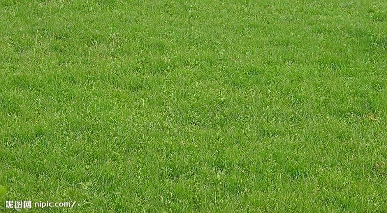 美国密西根州立大学草坪科学教学特色
