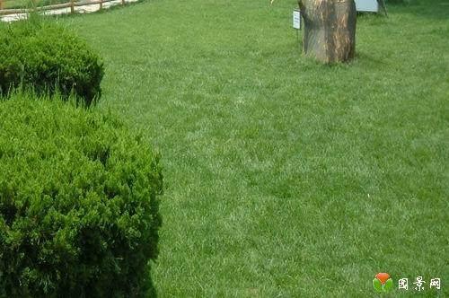 草坪在春季怎么管理的方法 图片