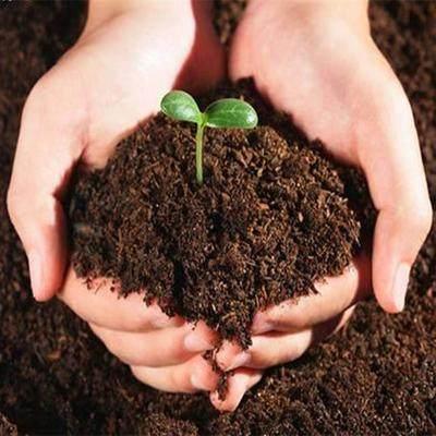 什么是盆栽土壤
