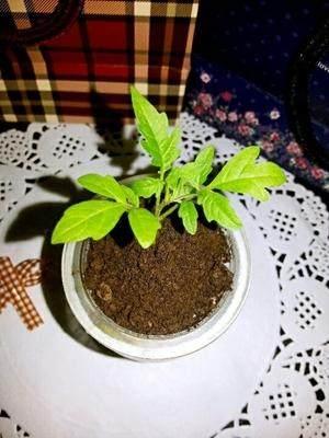 关于盆栽土壤加肥料的问题