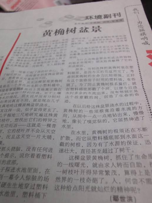 收到10.29《珠江环境报》样报,发文《黄桷树盆景》