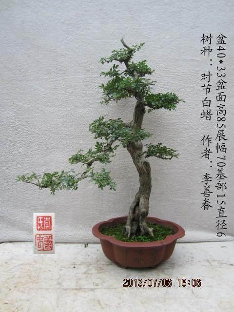 中国杂木盆景研讨会