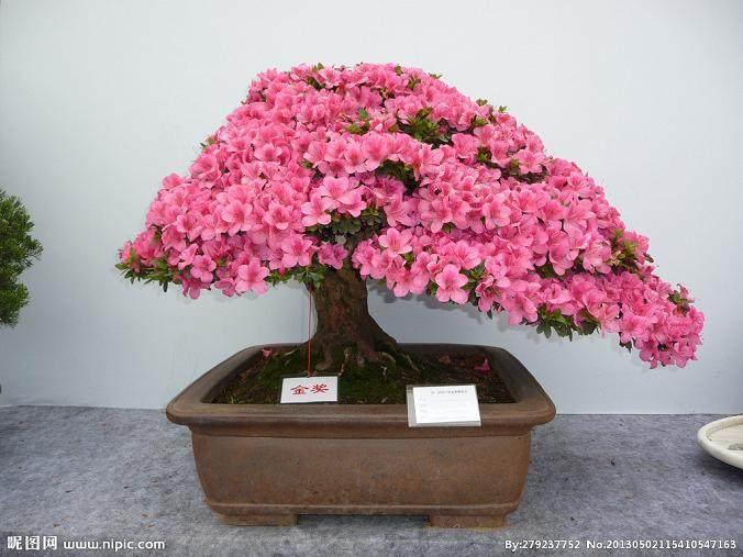 南昌盆景花卉批发市场的地址