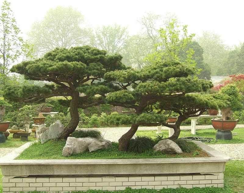 南昌市人民公园摆放30万盆各色鲜花迎国庆