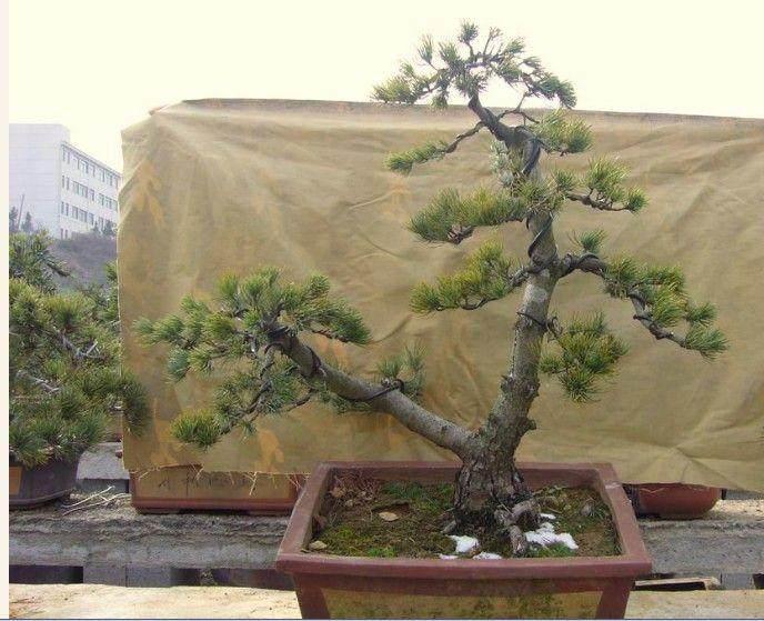 宁波:野蛮施工让月湖老树很受伤 还有几棵能幸存?