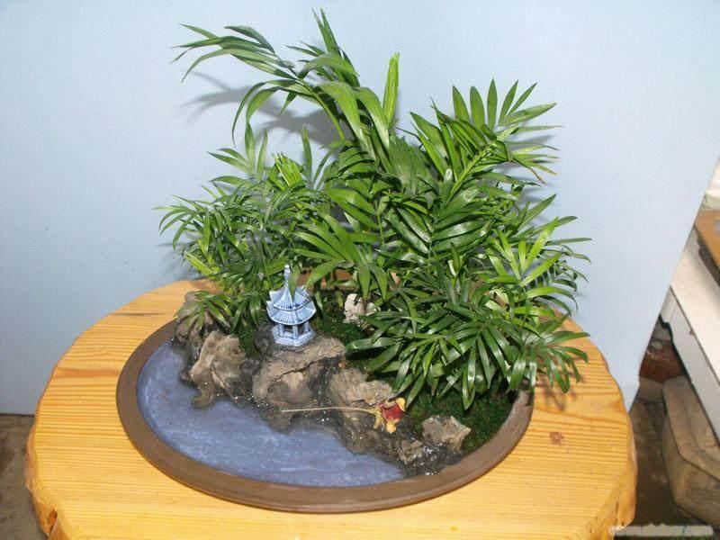 杭州哪里有花卉及小型植物盆景批发的市场?