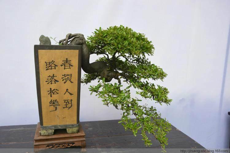 四川成都邛崃市花木盆景