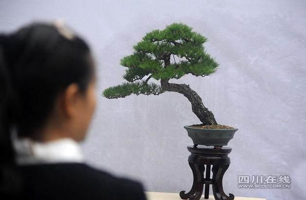 成都川派盆景园开园典礼