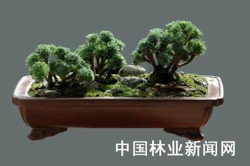 一盆微型苹果盆景树能卖到1.8888万元