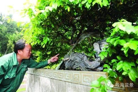 大师风采:朱子安与盆景园