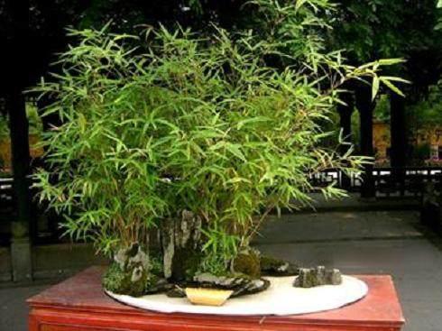 浙江老人花了40年心血种了400多盆景