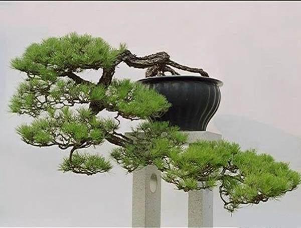 宁波市家庭盆景艺术展16日开幕
